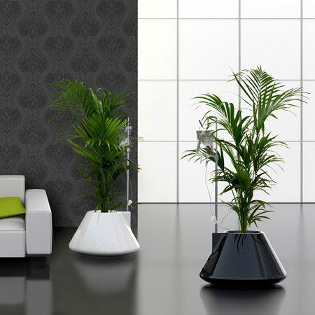 Macetas para el interior de tu casa o apartamento - Macetas para interiores ...