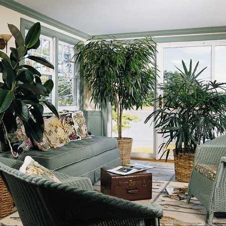 Plantas para el interior de tu casa - Tipos de plantas de exterior ...