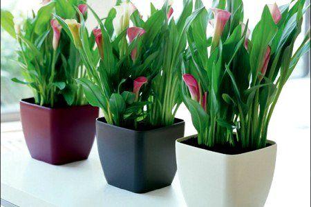 Macetas para el interior de tu casa o apartamento for Plantas de interior artificiales