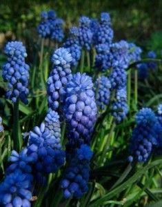 Color azul en el jardin