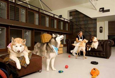 Resultado de imagen de hoteles de perros