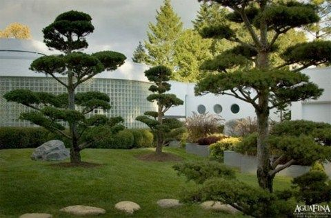 jardines asiaticos de aguafina