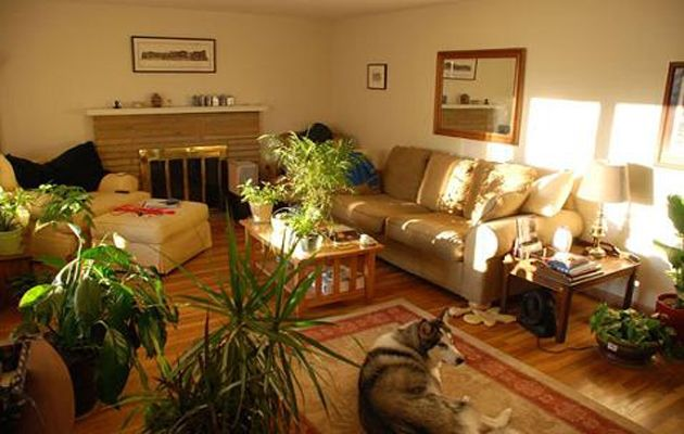 Decorar con plantas el interior de tu casa - Plantas en el interior de la casa ...