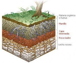 Plasticidad del suelo