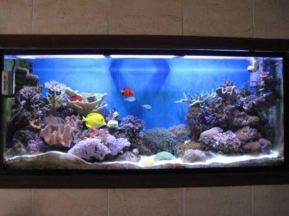 Construir un acuario en casa for Acuarios para peces marinos