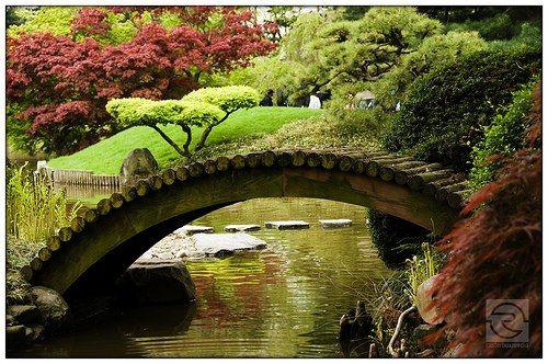 Tipos de plantas de jardin for Filtros para estanques de jardin