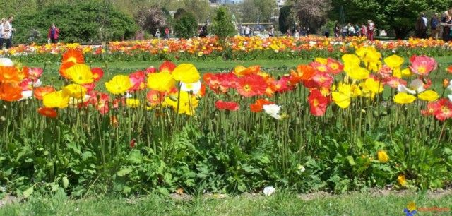 Tipos de plantas de jardin for Plantas y arboles para jardin