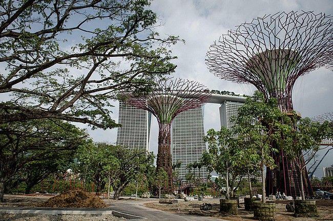jardines colgantes de singapur