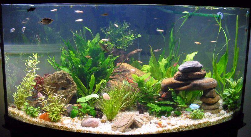 Acuarios decorativos for Peces para acuarios pequenos