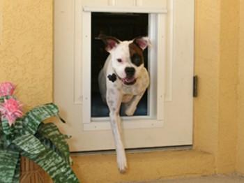 Cómo instalar una puerta para mascotas