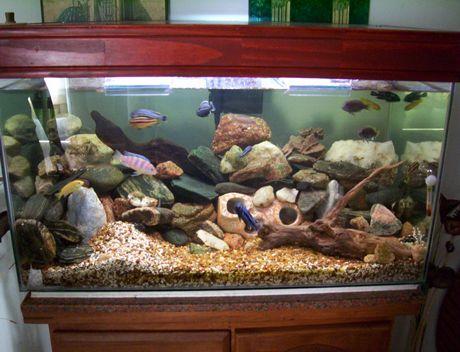 Como construir un acuario - Como decorar un estanque ...