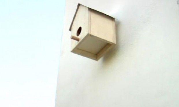 Hacer una casa para pajaros