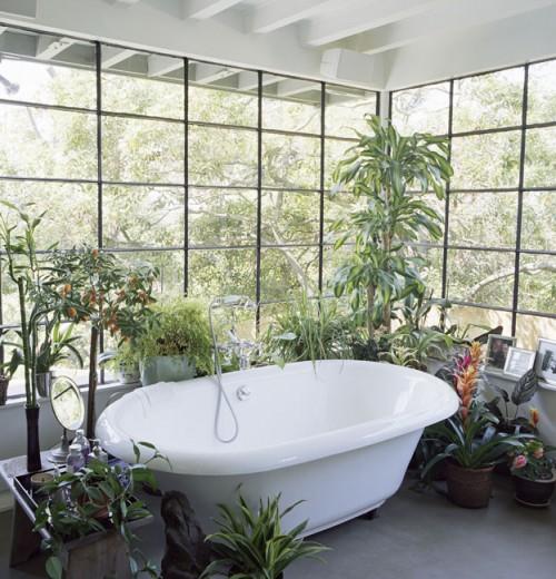 Baños decorados con plantas naturales 1