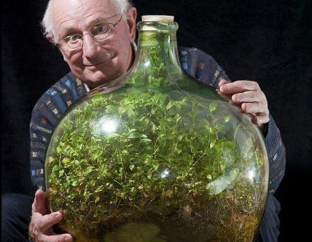 jardin dentro de una botella