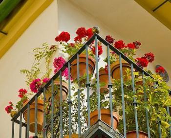 ¿Que plantas podemos usar para decorar el balcon