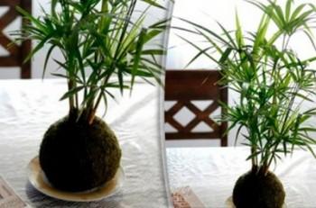 Decorar con kokedamas plantas sin macetas for Adornos para macetas