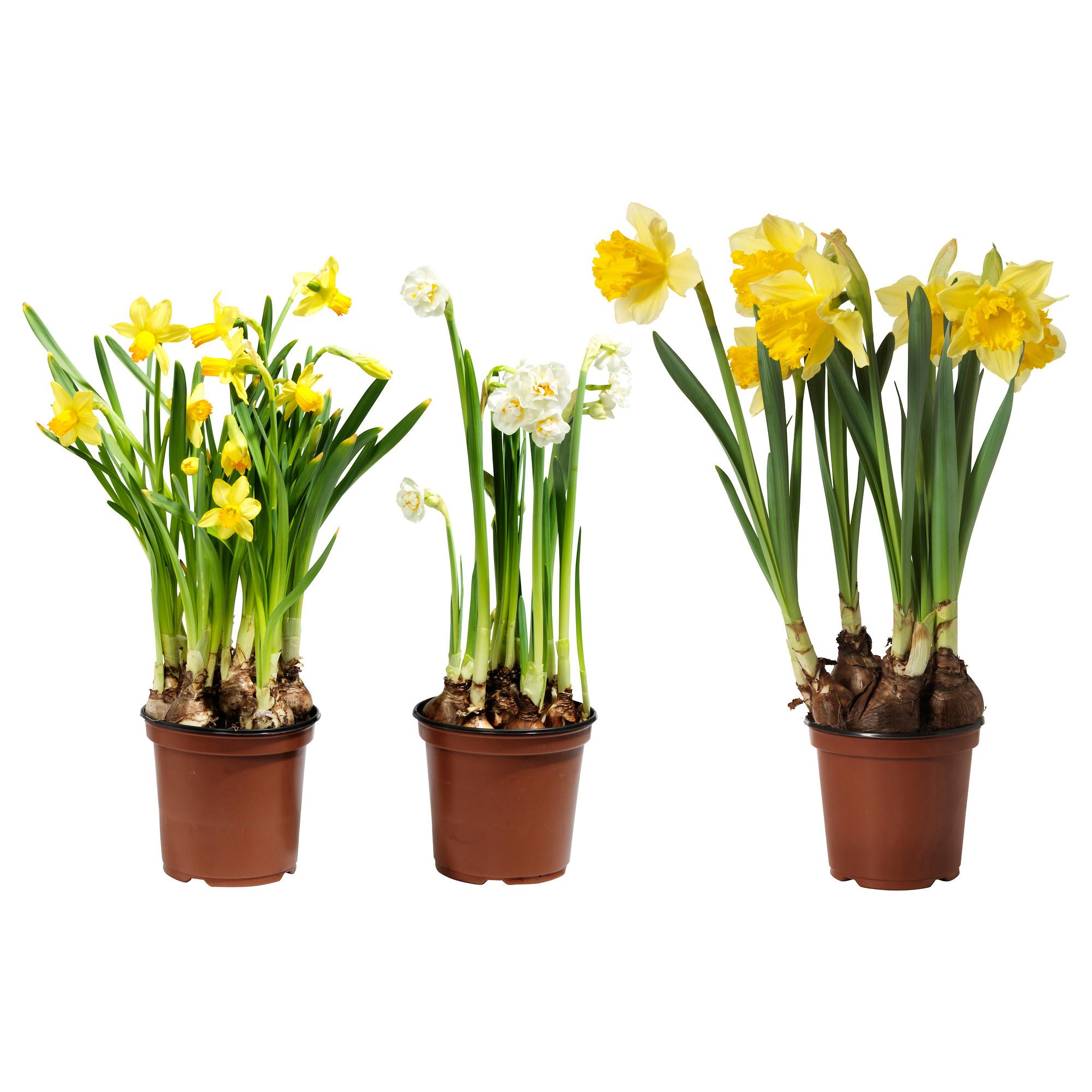 Macetas y plantas que tipo de maceta utilizar - Macetas para plantas de interior ...