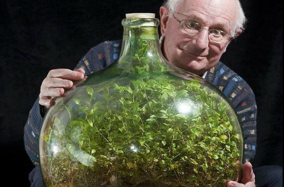 El jardin que creció dentro de una botella