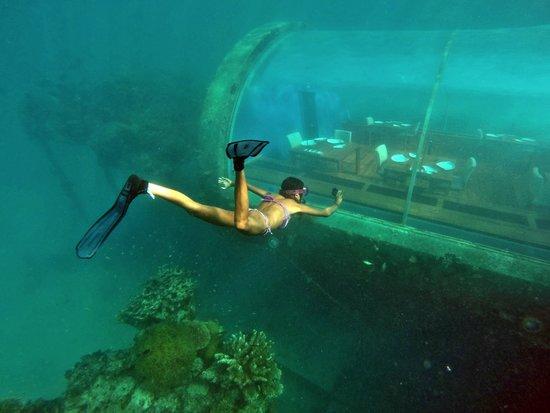 Ithaa. restaurante submarino