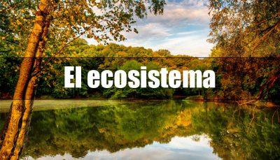 Tipos de ecosistemas según el medio